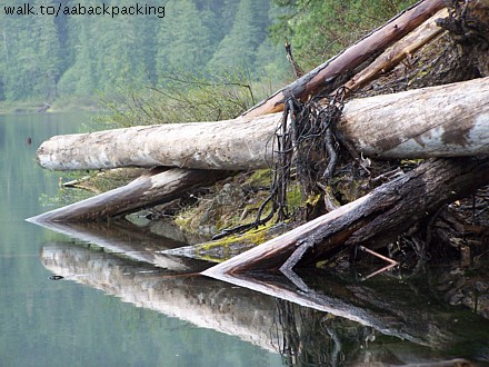 reflection of logs